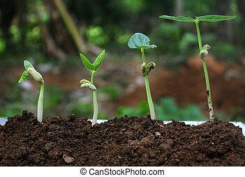 planterar, growth-stages, växt, växande