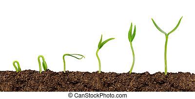 planterar, växande, soil-plant, isolerat, framsteg