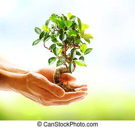 räcker, holdingen, över, bakgrund, grön, mänsklig, natur, växt