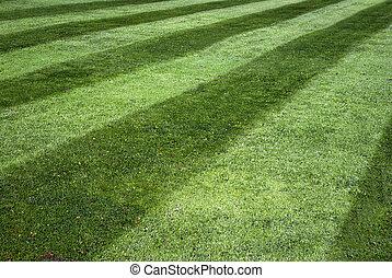 randig, gräsmatta