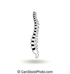 rygg, vektor, mänsklig, illustration