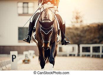 ryttare, häst, sport., utsikt., dressyr, utbildning, främre del, stående