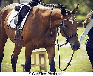 ryttare, klätt, sports, blyertsstift, tygel, ammunition, ryttare, häst
