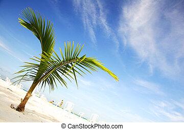 scenisk, strand