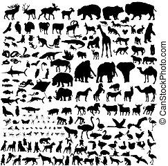 silhouettes, djur, kollektion