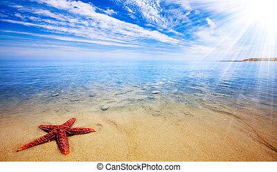 sjöstjärna, paradis