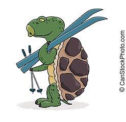 sköldpadda, blå, skidor, klar, skiing.