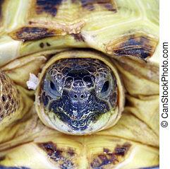 sköldpadda, foto, upp slut