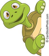 sköldpadda, rolig