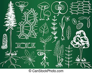 skissar, botanik, biologi, skola, -, växt, illustration, bord