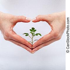 skydda, kärlek, natur