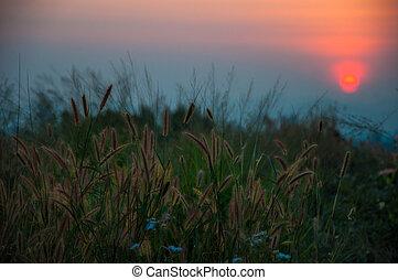 solnedgånger