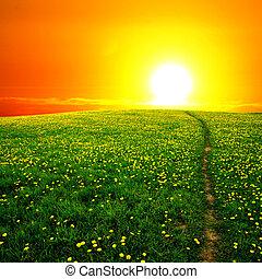 soluppgång, maskros, fält