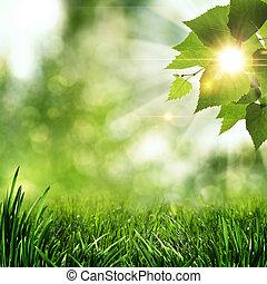 sommar, naturlig, abstrakt, bakgrunder, morgon, tidigt, skog