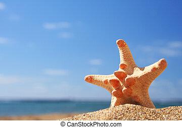 sommar, sjöstjärna