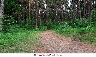 spår springa, kvinna, skog