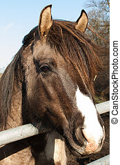stående, häst, brun