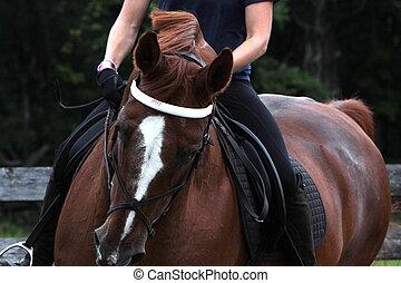 stående, häst, dressyr