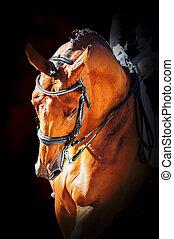 stående, häst, sport, dressyr