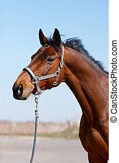 stående, häst, sports
