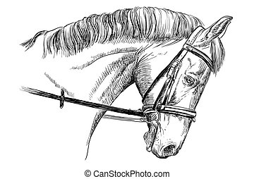 stående, tygel, häst