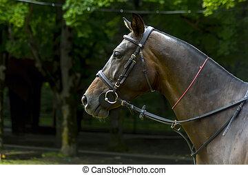 stående, vacker, horse.