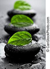 stenar, vatten, bladen, droppar, zen
