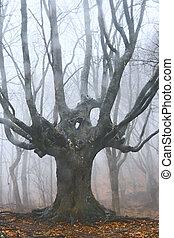 stort träd, skog, död, dimmig
