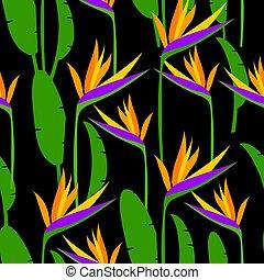 strelitzia., mönster, seamless, illustration, tropisk, vektor