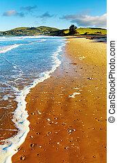 synhåll, coastal, nya zeeland