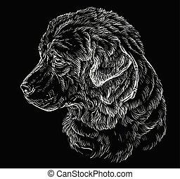 teckning, hand, fåraherde, caucasian, vektor, stående, hund, svart
