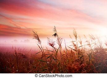 tidigt, dimmig, mist, landskap., morgon