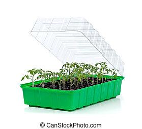 tomat, liten, groning, bricka, plantor