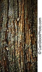 trä, gammal, surface., ridit ut