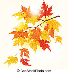 träd, bladen, flygning, höst, vacker