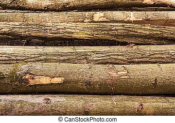 träd, loggar, fura