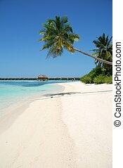 träd, palm, hängande, strand, paradis