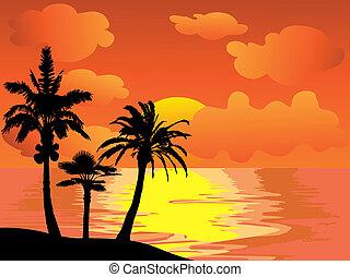 träd, palm, solnedgång, ö