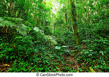 tropical landskap, mest rainforest