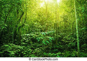 tropisk, fantastisk, tjock skog