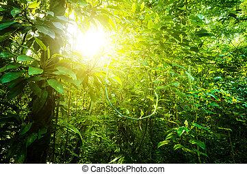 tropisk, naturlig, skog