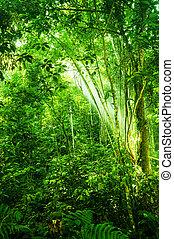 tropisk, naturlig, tjock skog