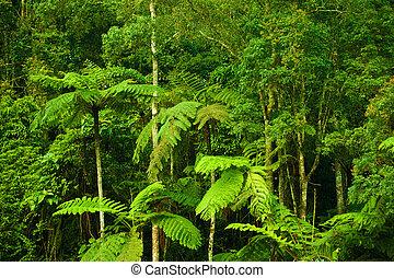 tropisk, tjock skog, landskap