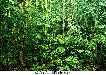 tropisk, tjock skog, otrolig