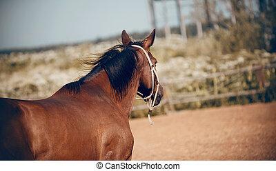 ung, sports, häst, grimma