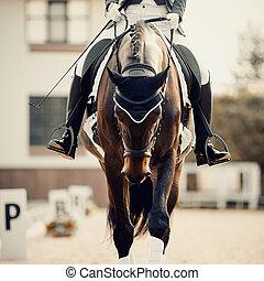 utbildning, sport., utsikt., häst, stående, dressyr, främre del, ryttare