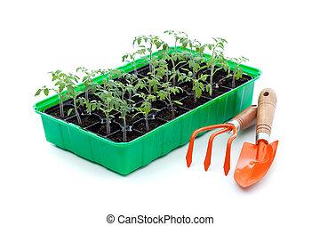 utensils, trädgårdsarbete, plantor