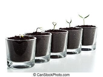 utveckling, stegen, växt, ung