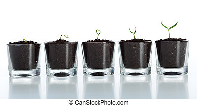 utveckling, tillväxt, -, växt, ung