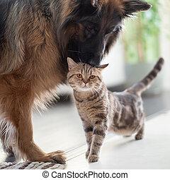 vänskap, tillsammans, katt, hund, mellan, pets., indoors.